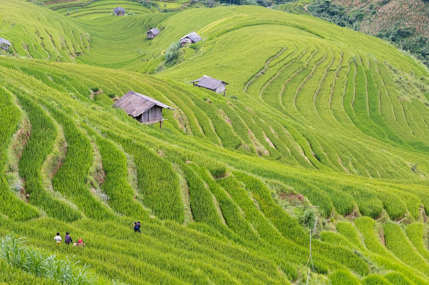Village La Pan Tan Mu Cang Chai 6 SM