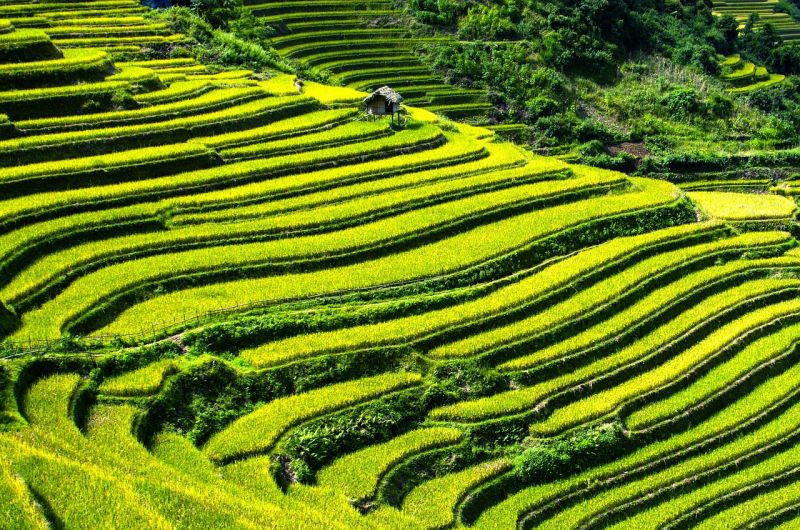 Des paysages verdoyants et des vietnamiens actifs