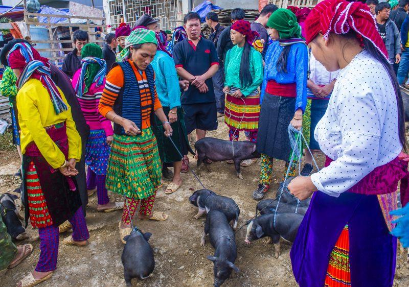 Les marchés ethniques de la province de Ha Giang