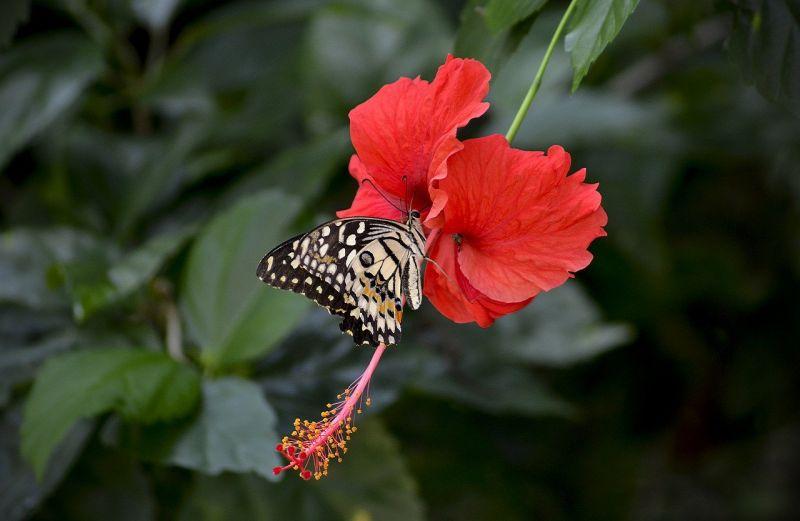 La biodiversité au Vietnam