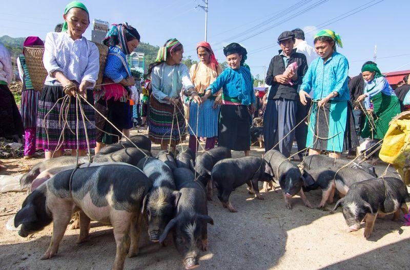 A la rencontre des ethnies du Nord-Ouest du Vietnam