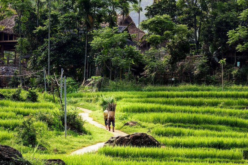 Parcourir la réserve naturelle de Pu Luong à pied