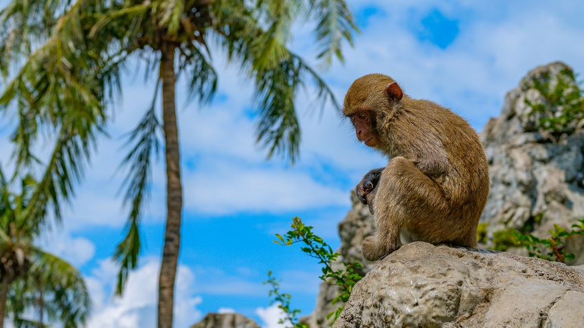 bigstock Macaque Sits On A Stone In The SM